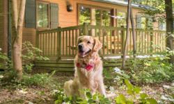 Met je hond naar Disney's Davy Crockett Ranch